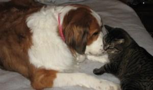 Meet Maizie and Sammy